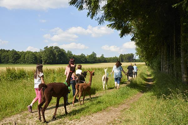 Ferien in Hessen Lamatrecking